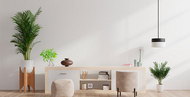 Plantas-para-decorar-hogar---blog---Cofersa