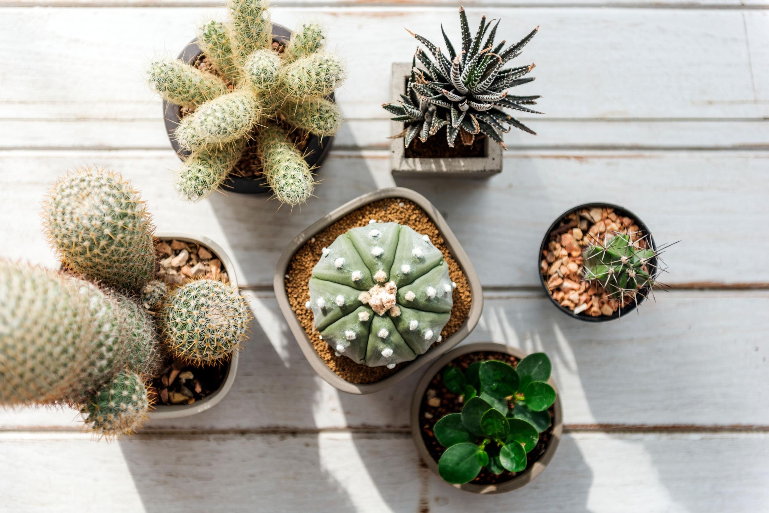 10 razones para tener plantas en casa-Plantas-para-decorar-hogar---blog---Cofersa